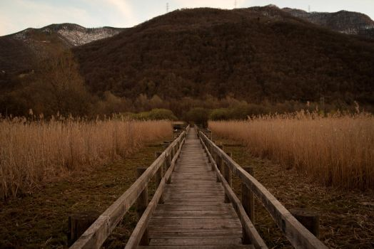 lined_path by simo2409