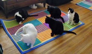 5 Black and White Cats by Colliemom
