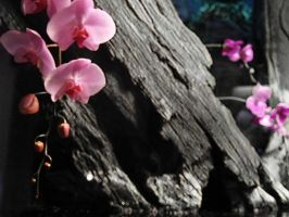 The Orchid by firesign24-7