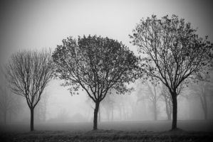 Three by Tree by MarioDellagiovanna