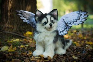 SOLD!100 % Handmade Poseable Husky with wings! by MalinaToys
