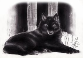 Black Wolf by RedPassion