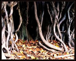 Roots IV... by symons-stock