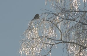 The Bird in the GlassTree 3 by Kattvinge