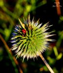 Ladybug on Spikes and a Spider by YG7