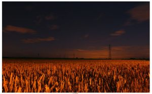 Moonlit Cornfield by TakeMeToAnotherPlace
