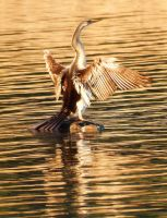 Drying her wings 1 by wildplaces