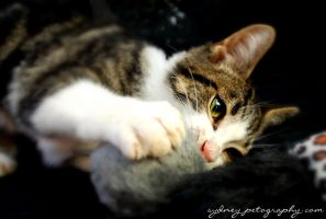 Pound Cats 2747 by sydneypetography