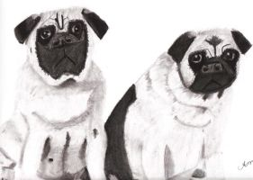 Pug Puppies by Crazy-Brave-Girl