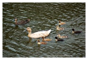 Life On An Albany Pond 10 by AdamsWife
