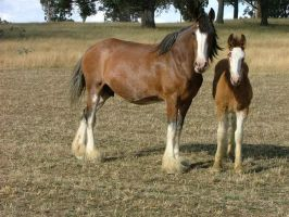 Clydesdale Mare and Foal 6 by How-You-Remind-Me