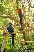 Parrot Paradise by meihua