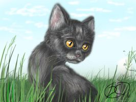 Greystripe by DraKitty