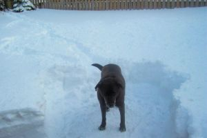 my dog in the snow by lordofflowers
