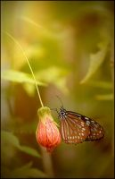 Portraits: Butterfly by grace-note