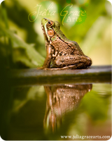 Reflected Frog by JuliaGraceArts
