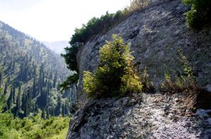 Big rock with small spruce by voldemometr