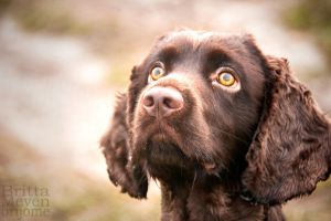 Dog in UK2 by brijome