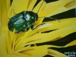 Beetle on Flower by mark331