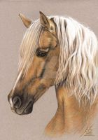 Berber Stallion Portrait by ArtsandDogs