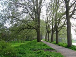 Dike with trees by schaduwvacht
