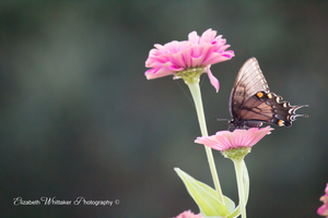 Butterfly and Flower by iLantiis