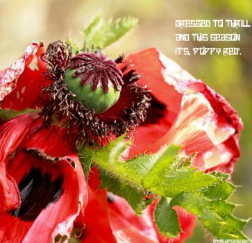 Poppy Red by whimsicalworks