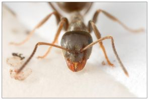 Drinking Ant 3 by EdwinBont