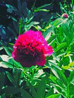 Flower by StationAperture