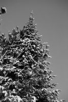 le grand sapin by MilA-10