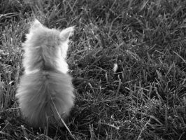Kitty in black and white by kshelton2011