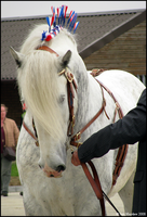 Shire Horse Show: Stallion 4 by ladyepona