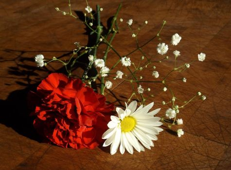 Carnation and Daisy by 4TheLoveOfNature