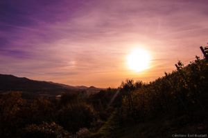 Wonderful sunset behind the vineyards by sylve203