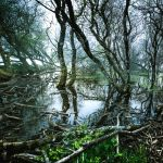 Bayou by OlivierAccart