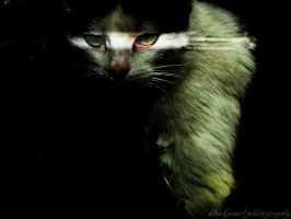 devilish cat... by blackkpearl