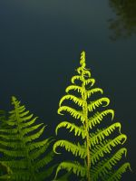 Golden Green by Photopathica