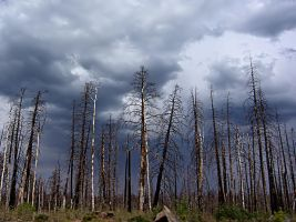 FOREST FIRE VICTIMS by CorazondeDios