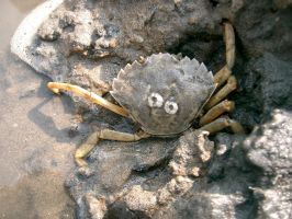 Crab by Puttee
