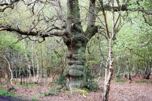 The old man of the woods by Mark-Allison