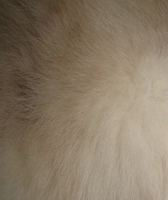 texture - fur 004 by brookeasaurr