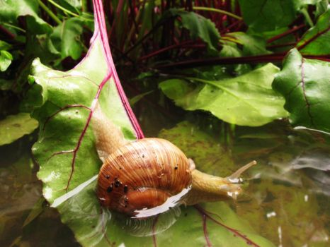 flooded snail by Shannon1000