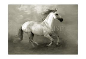 Horse - 8 by mayonaise1980