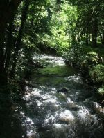 Water in the woods by charlalaliz