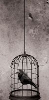 Ugly Birds In A Beautiful Cage by stephanielok