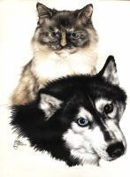 Cat and Dog by Ethan-Carl
