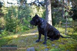 Oris Sitting And Looking Ahead by OrisTheDog
