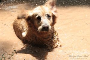 Mud bath by pixellorac