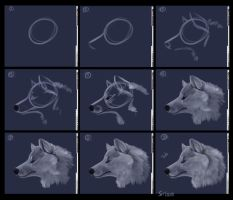 OC tutoral for Wolf Profiles by daisy7