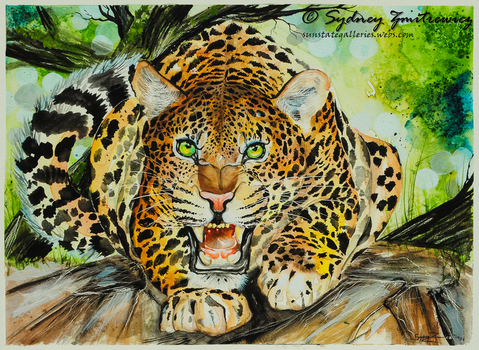 Ferocious by SunStateGalleries